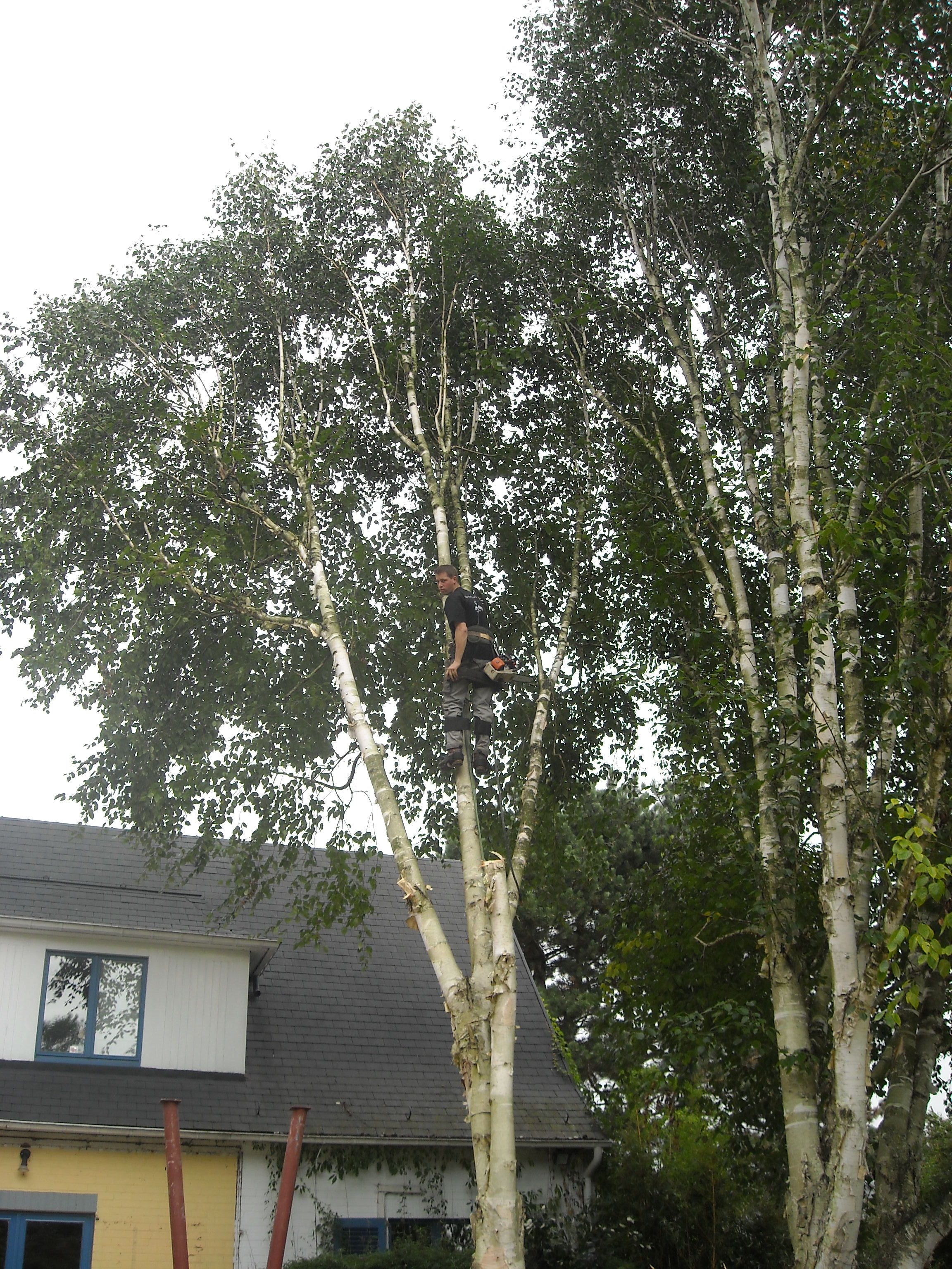 cyprien meskens abattage lagage d 39 arbres pose de cl tures cr ation pelouse pavage. Black Bedroom Furniture Sets. Home Design Ideas
